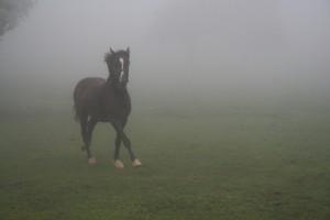 Nebel Foto: j_aigner/flickr